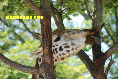 zoo14-24.jpg