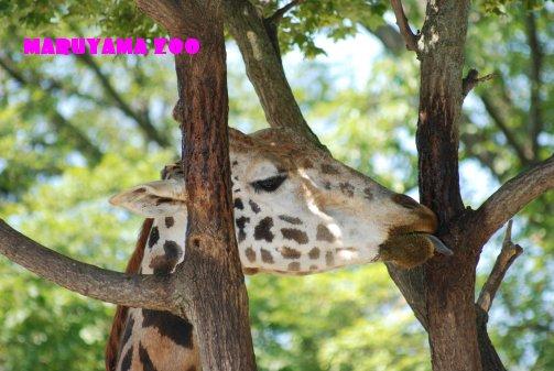 zoo14-25.jpg