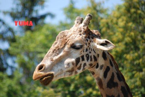 zoo14-28.jpg