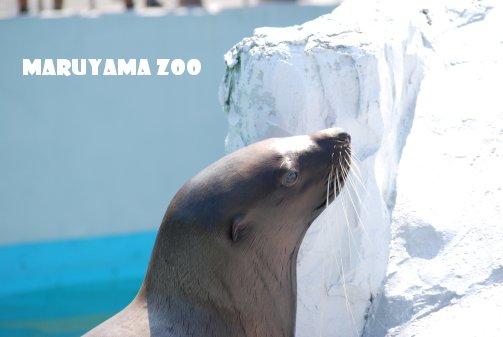 zoo14-30.jpg