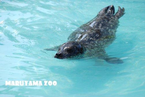 zoo14-31.jpg