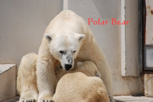 zoo14-38.jpg