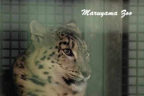 zoo14-4.jpg