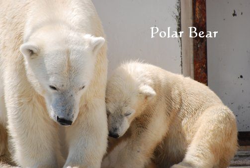 zoo14-40.jpg
