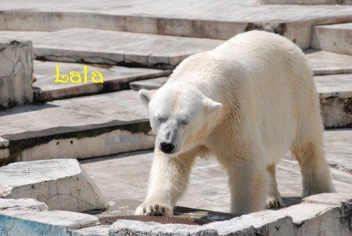 zoo14-43.jpg