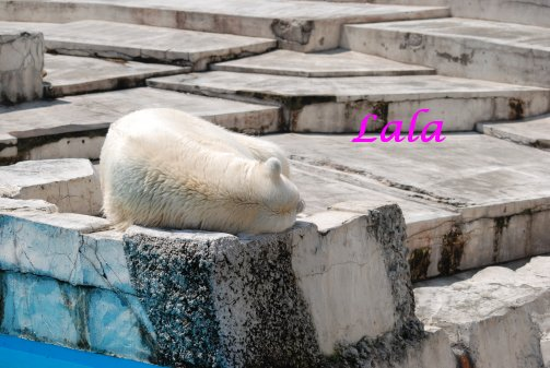 zoo14-44.jpg
