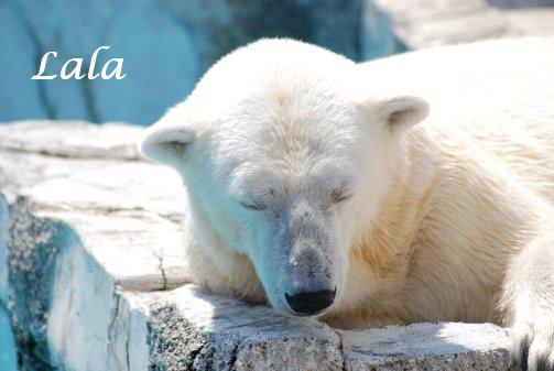 zoo14-47.jpg