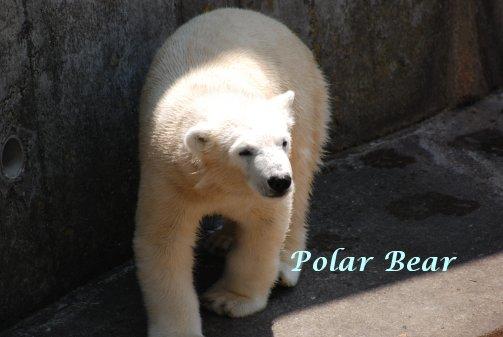 zoo14-49.jpg
