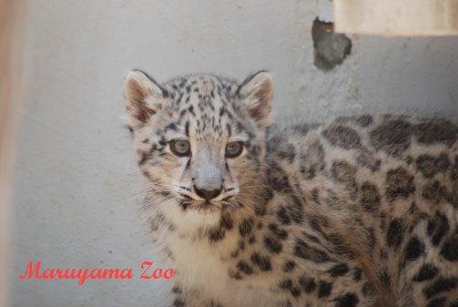 zoo14-5.jpg