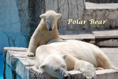 zoo14-57.jpg