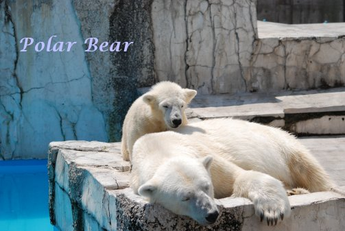 zoo14-58.jpg