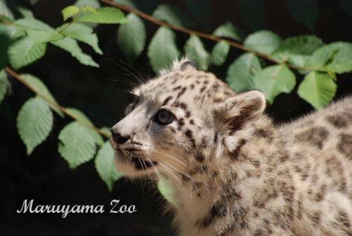 zoo14-6.jpg