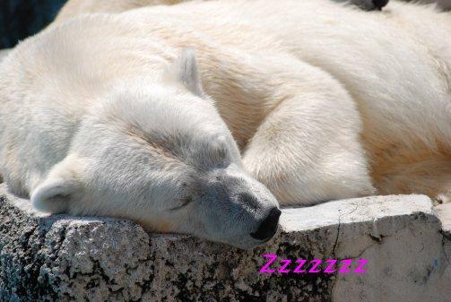 zoo14-61.jpg