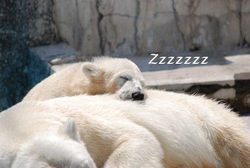 zoo14-62.jpg