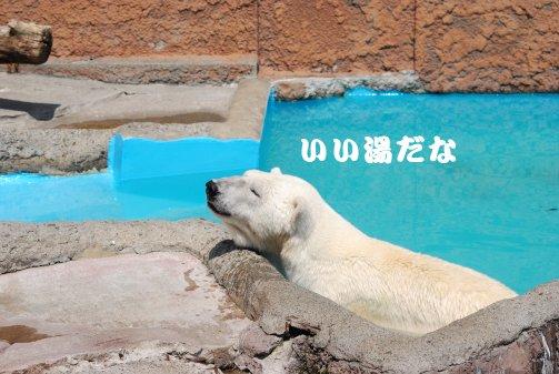 zoo14-63.jpg