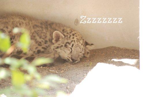 zoo14-65.jpg