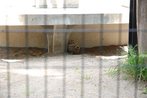 zoo14-84.jpg