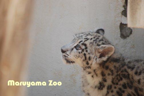 zoo14-9.jpg