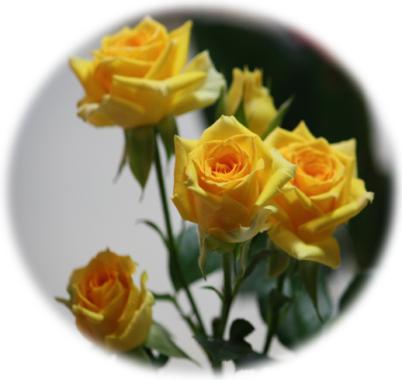 スタンプラリーバラの花