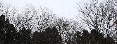 今日の那須は雪模様です
