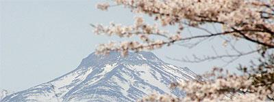 去年の那須の桜