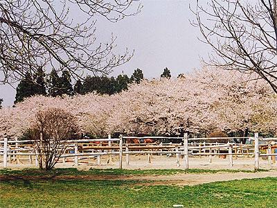 千本松牧場2