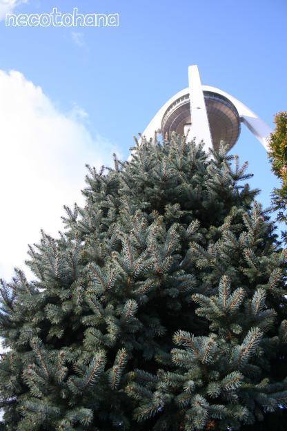 IMG_6984モミの樹1