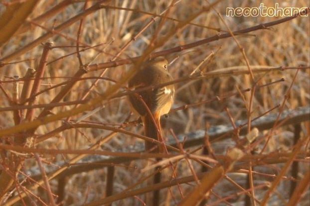 IMG_7537鳥2