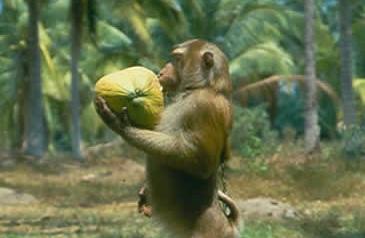 coconutmonkey11.jpg