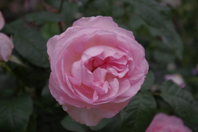 シャリファ アスマ (3)