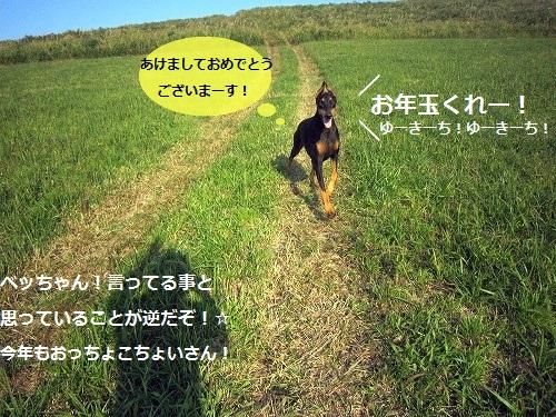 2012<br />011120500360d_20120120142025.jpg