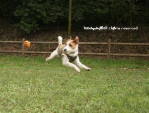 ボール逃しちゃったっ