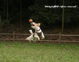 ボールキャッチ~~