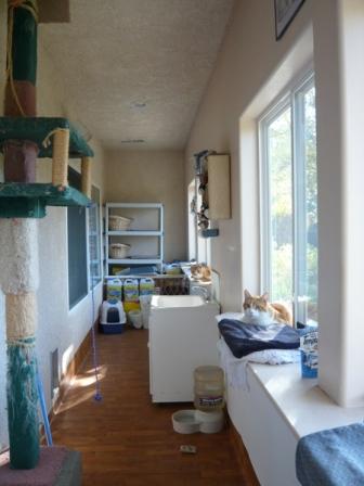 朝の猫部屋