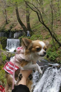 滝の音にちょっとびびり気味