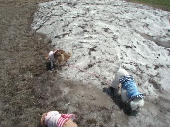 雪初体験のノエル。
