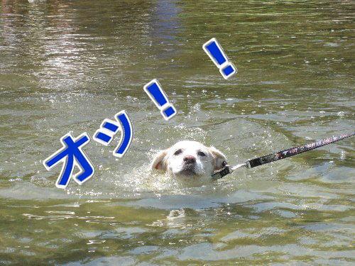 2011・07.・16猪名川2