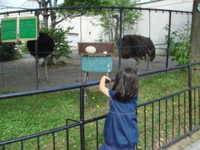 旭山動物園 だちょう 卵