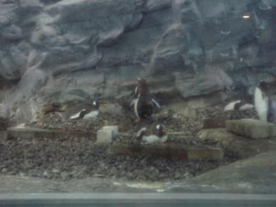 旭山動物園 ペンギン 卵 あっため