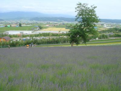 2007.7.6  ファーム富田の風景