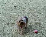ボールで遊ぶの~