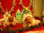 レーちゃんとクリスマス写真