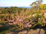 ぐらんぱるの桜