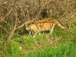 茂みの中から猫ニャン
