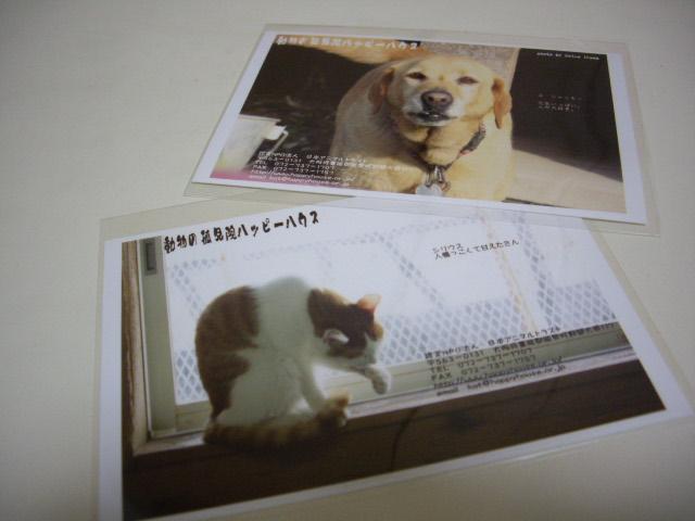 保護犬・保護猫のポストカード