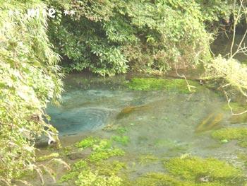 20061006柿田川1