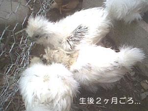 20070226ukokkei2.jpg