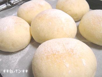 20070406shiro-pan.jpg