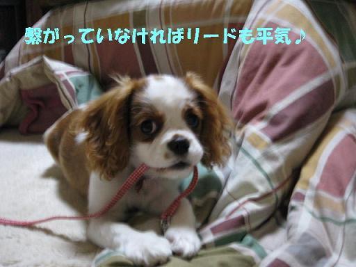 IMG_0041-2.jpg