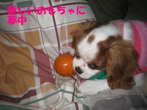 IMG_0069-2.jpg